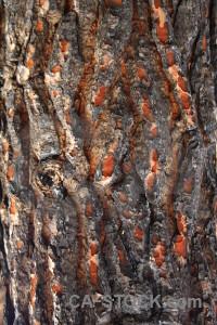 Europe burnt bark wood texture.