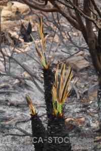 Europe burnt montgo fire plant javea.