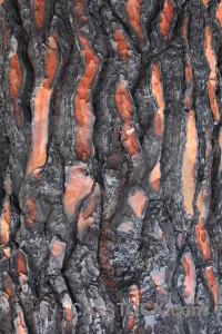 Europe burnt texture javea spain.