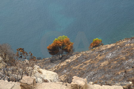 Europe javea burnt spain tree.