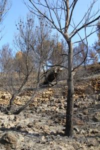 Europe javea tree vehicle montgo fire.