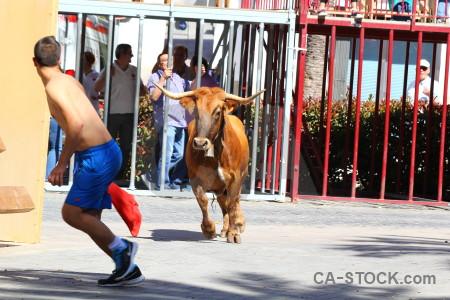 Europe javea white bull running spain.