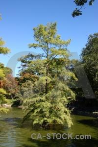 Europe madrid water tree spain.