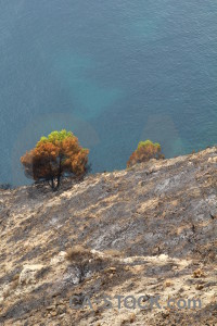 Europe montgo fire javea tree burnt.