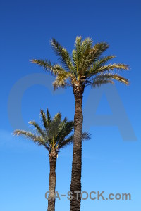 Europe palm tree blue spain javea.