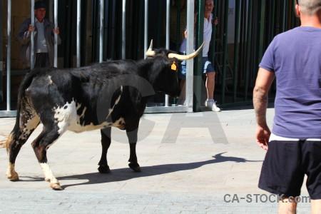 Europe person bull running white animal.