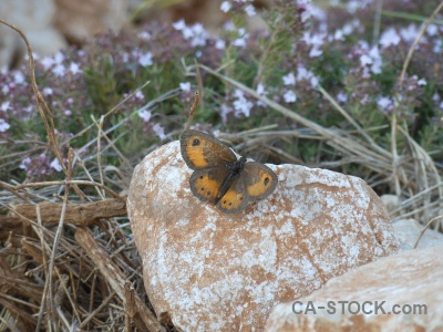 Europe rock animal spain butterfly.