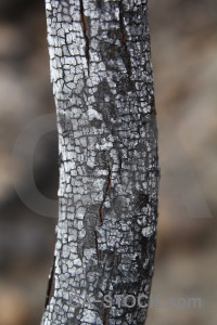 Europe spain ash javea chared.