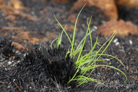 Europe spain ash plant burnt.