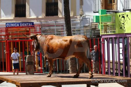 Europe spain red bull animal.