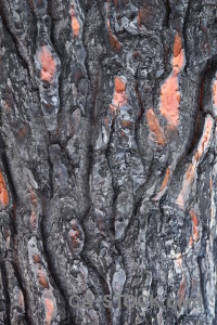 Europe spain wood bark javea.