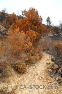 Europe tree montgo fire burnt javea.