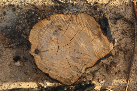 Europe wood circle texture log.