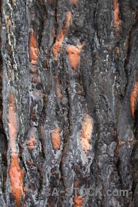 Europe wood spain bark texture.