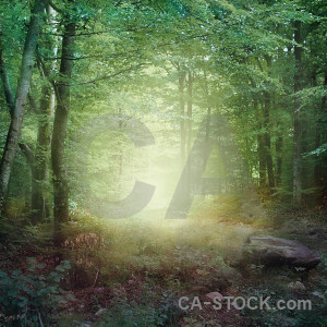 Fantasy backgrounds premade green.