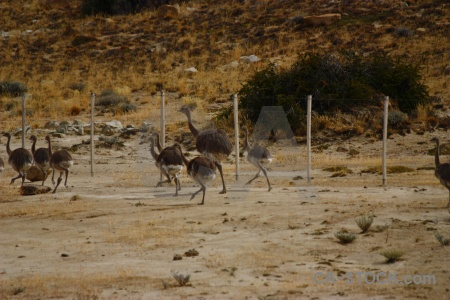 Fence animal emu ostrich south america.