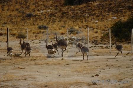Fence patagonia emu argentina ostrich.