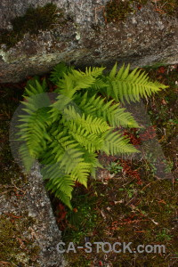Fern green leaf plant.