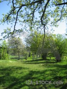 Field green.