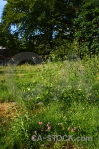 Field green grass tree meadow.