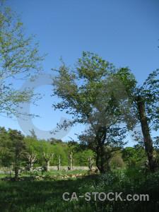Field meadow grass blue tree.