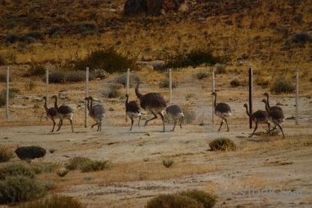 Field patagonia emu fence ostrich.