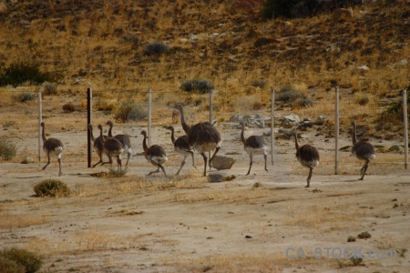 Field patagonia fence animal rhea.