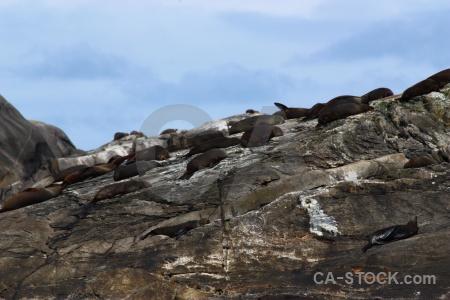 Fiord animal rock south island new zealand.