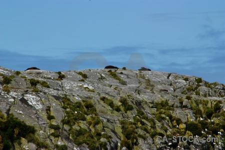 Fiord doubtful sound fiordland seal rock.
