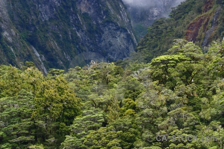 Fiord doubtful sound tree south island mountain.