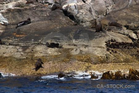 Fiord fiordland new zealand rock animal.