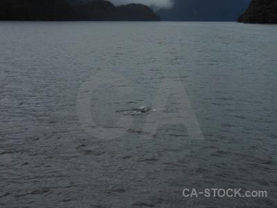 Fiordland new zealand animal fiord doubtful sound.