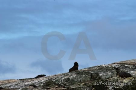 Fiordland sky new zealand sound animal.