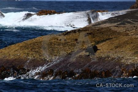 Fiordland sound new zealand animal rock.