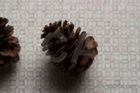 Fir cone dried flower plant.