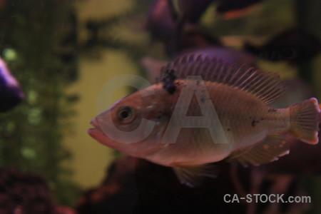 Fish animal.
