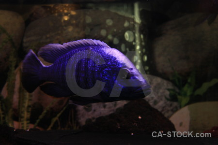 Fish animal black.