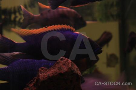 Fish black animal.