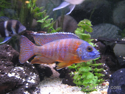 Fish green animal purple.