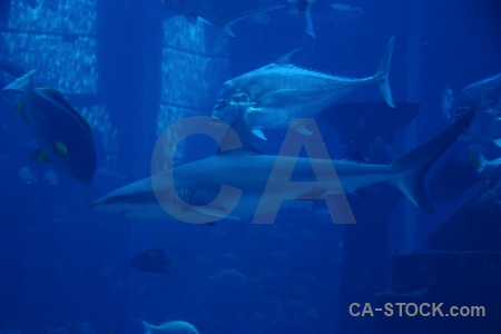 Fish uae western asia shark aquarium.