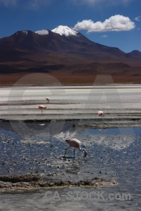 Flamingo south america landscape bird salt.