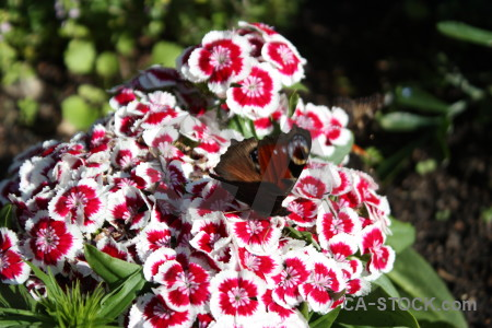 Flower animal butterfly plant insect.