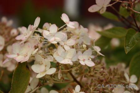 Flower brown plant.