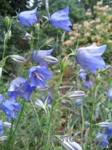 Flower green plant blue.