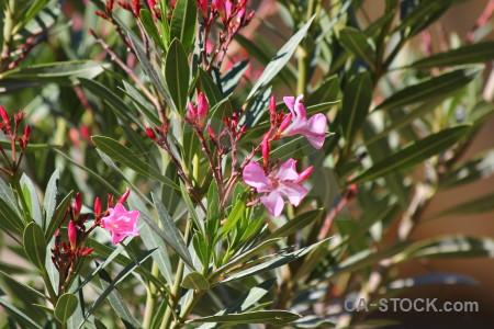 Flower green plant europe spain.