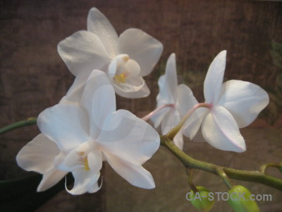 Flower orchid plant.