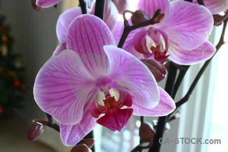 Flower orchid purple plant.