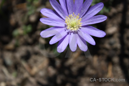 Flower plant.