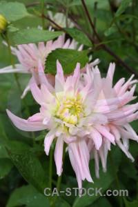 Flower plant green pink.