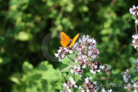Flower plant insect butterfly animal.